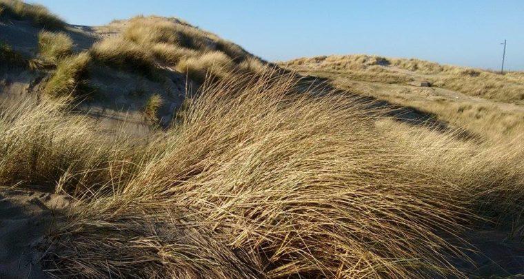 Lombardsijde - Een verborgen pareltje aan de Belgische kust