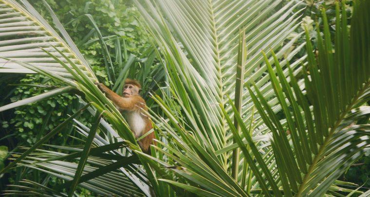 Het verborgen paradijs in Unawatuna