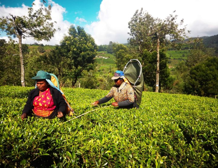 REISROUTE: Backpacken in Sri Lanka - route voor 1 maand