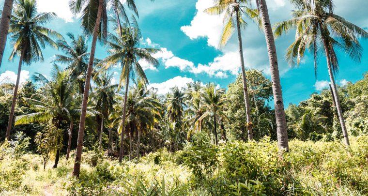De ideale reisroute door Palawan