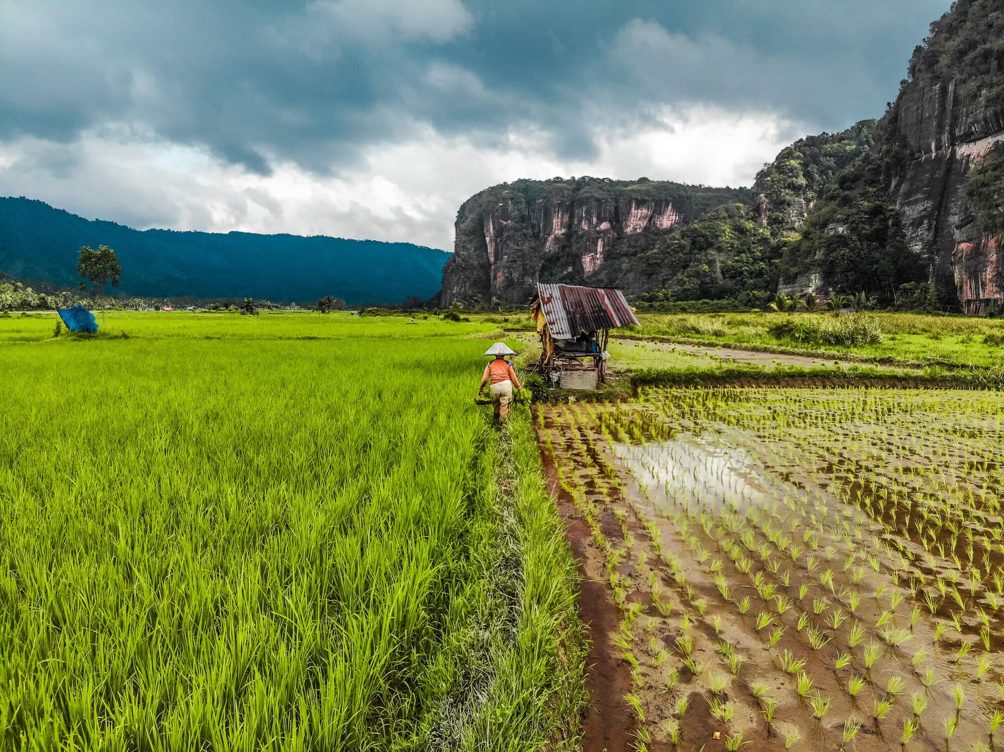sumatra, rijstvelden, dronefoto, dji mavic air sample, dji mavic air, testshot, hoeveel kost reizen door indonesië