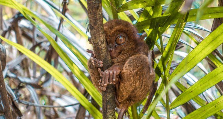 Bohol - Van chocolade heuvels tot kleine spookdiertjes