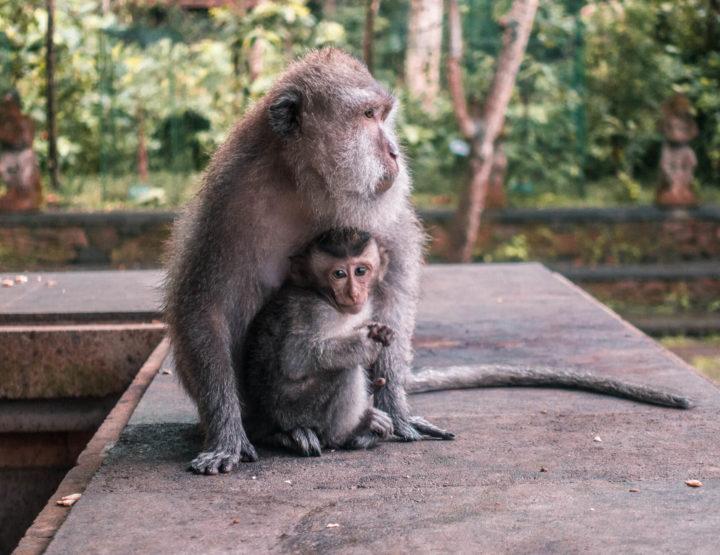 Ubud Monkey Forest - Het koninkrijk van de apen